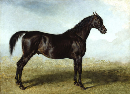 Guy Mannering: A Race Horse