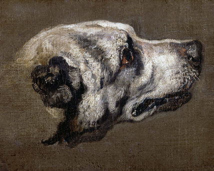 Head of a Hound