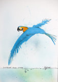 Nextinction - Blue Throated Macaw