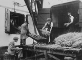 West India Docks c.1935: Imported bananas arriving at the docks