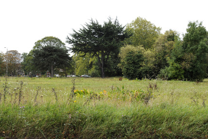 Putney Heath: 2009