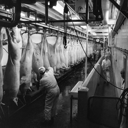 The abattoir at Walls Sausage Factory: c. 1960