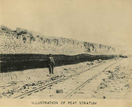 Illustration of the Peat Stratum at Tilbury Dock: 1885