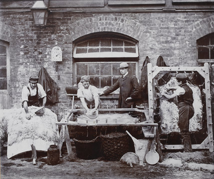 Cleansing and Paring Sheep Skins for Wool Rugs; c1885