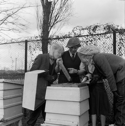 Beekeeping at the Franklin D. Roosevelt School, Hampstead