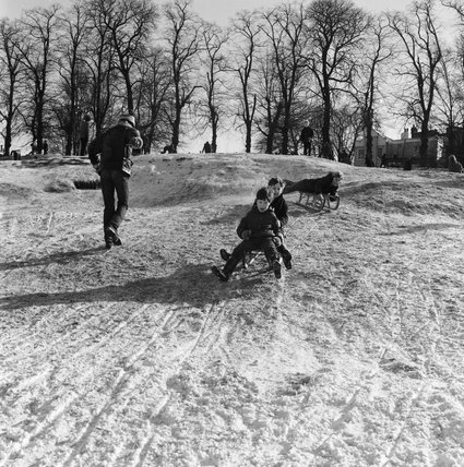 Boys on a toboggon, Hampstead Heath; 1969