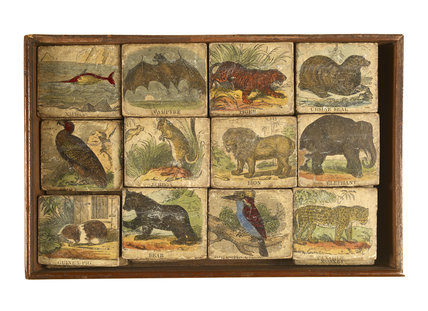 Natural history on blocks