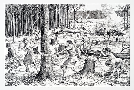 Reconstruction drawing of early farming communities clearing woodland.