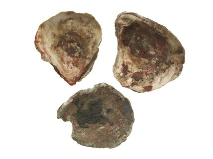 Three oyster shells with traces of pigment: 13th century