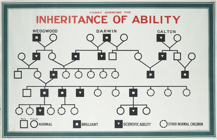 Chart showing inheritance of ability, Eugenics Education Society: 1926