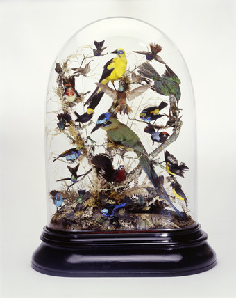 Glass stuffed bird case: 19th century