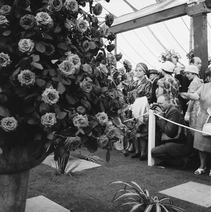 The Chelsea Flower Show: 1964