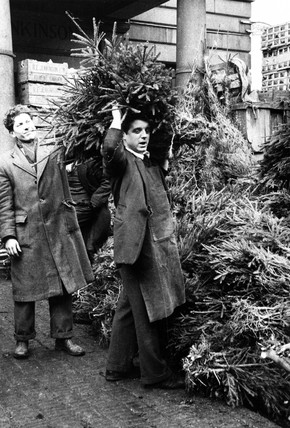 Christmas trees in Covent Garden Market: 1952