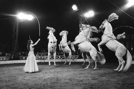 Prancing horses, Chipperfield's Circus: 20th century