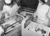 Premature babies in incubators, 4 October 1956.