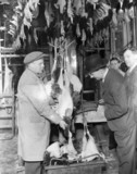 Butcher selling turkeys during the Christmas period, 19 December 1932.