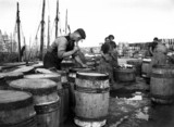 Fisherman nailing a lid to a barrel of fish, Whitby, North Yorkshire, c 1900s.
