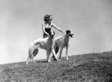 Young woman holding two borzoi dogs, c 1930s.
