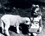 Small girl holding a box of chicks next to a lamb, c 1930s.