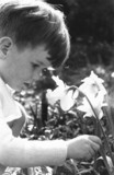 Young boy picking a daffodil, c 1930s.