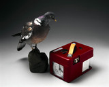 Stuffed pigeon with racing clock, 1998.
