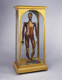 Wax male anatomical figure, Italy, 1776-1780.