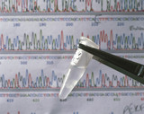 DNA sequence and sample of DNA.