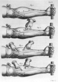 Circulation of the blood, 1766.