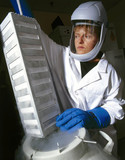 Producing bone cells for use in 'bio-glas' bonding, October 2001.