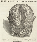 The brain exposed, 1543.