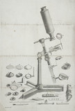 A microscope, 19th century.