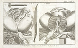 Muscles of the perineum, 1780.