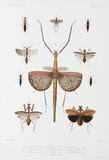 Types of insect, Australia, Solomon Islands and Indonesia, 1837-1840.