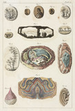 Dendrites and agates, 1775-1781.