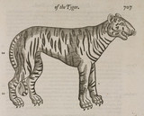 The Tiger, 1607.