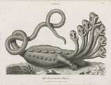 'The Seven-headed Hydra', 1806.
