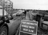 Foot and mouth vehicle wash area, 27 November 1967.