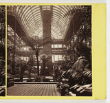 Interior of Palm House, c 1865.