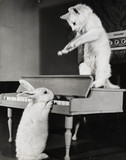 Cat and rabbit with piano.