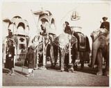 State elephants at a Durbar, India, c 1908.