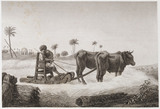 Threshing machine, Egypt, c 1798.