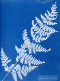 Cyanotype of Lastrea cristata, 1853.