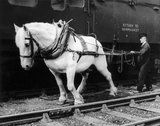A shunting horse with his 'driver', c 1963.