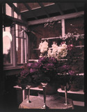 Autochrome of pink roses in a silver vase in a greenhouse, c 1910.