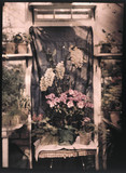 Autochrome of flowers in a greenhouse, c 1908.