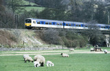 Sprinter train in the countryside with sheep, c 1980s.