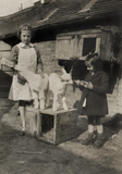 Two girls feeding goats, c 1940s.