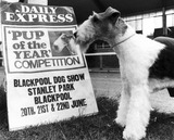 Dog with dog show poster, Blackpool, 1972.