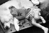 Little girl asleep with her dog, Blackpool Dog Show, June 1973.
