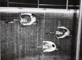 Wall of Death',motor cycle,with Harry Holland,Ricky Dare & Johnny Dare, 1949